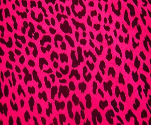 leopard, pink, and animal print image
