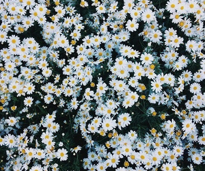 cool, wallpapers, and flowers image