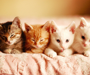 cats, cuteness, and kittys image