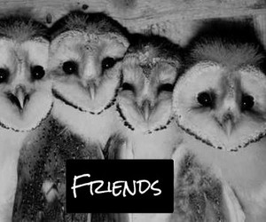 funny, happy, and owls image