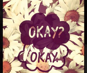 daisies, flowers, and okay image