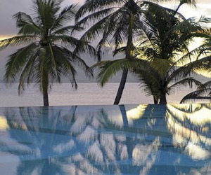 summer, pool, and palm trees image