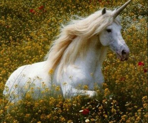 unicorn and flowers image