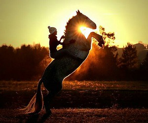 horse, sun, and sunset image