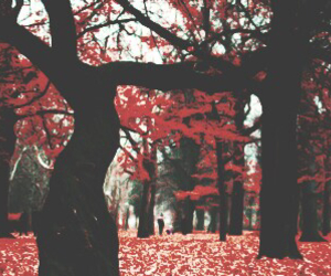 red, header, and tree image