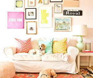 dog, room, and cute image