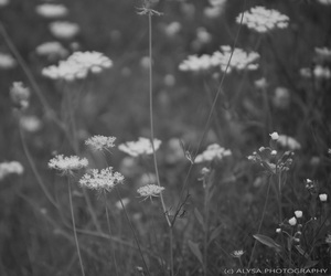 black and white, bokeh, and flower image