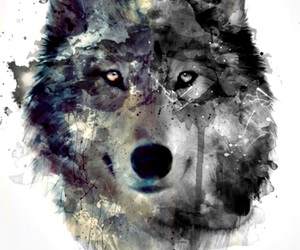 art, b&w, and wolf image