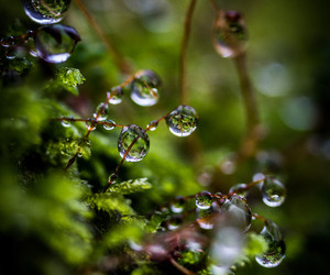 dewdrops, nature, and leaves image