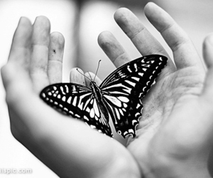 butterfly and black and white image