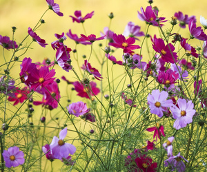 colorful, flower, and flowers image