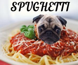pug dog pasta image