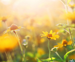 flowers, photography, and sun image