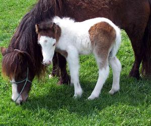 farm, horses, and animal image
