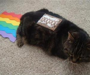 funny, cat, and rainbow image