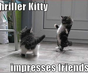 thriller, cat, and funny image