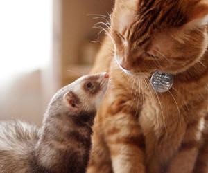 cat, animals, and ferret image