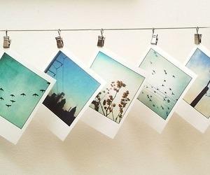 photo, photography, and polaroid image