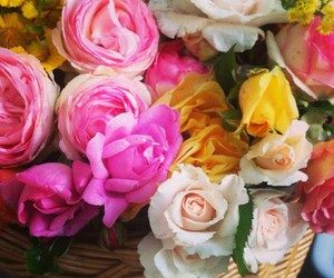 flowers, pretty, and rose image
