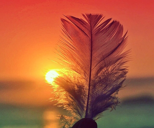 feather, sunset, and sun image