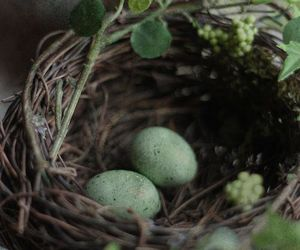 nest, bird, and green image