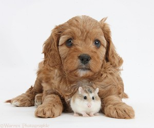 cute animals, dogs, and hamster image
