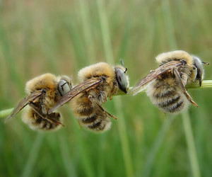 bee, bugs, and insects image
