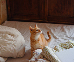 cat, cute, and photography image