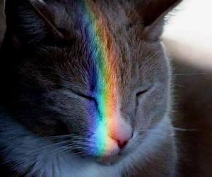 animal, cuteness, and green image