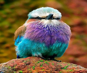 bird, colorful, and cute image