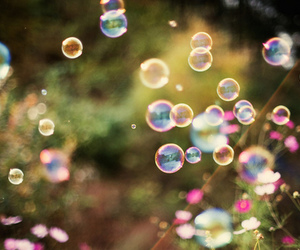 bubbles, flowers, and photography image