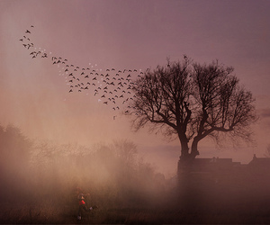 amy, birds, and tree image