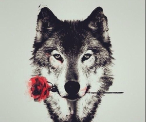 wolf, rose, and art image