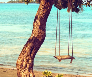 summer, tree, and beach image