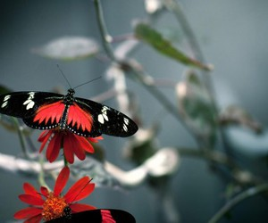 animals, butterfly, and close image