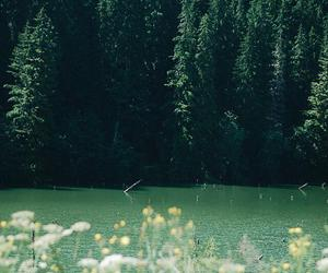 green, landscape, and nature image