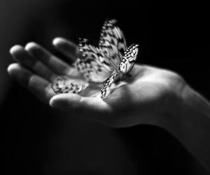 butterfly, hand, and transformation image