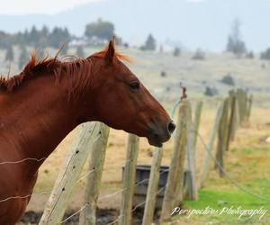 beautiful, fence, and stable image
