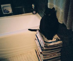 cat, black, and vintage image