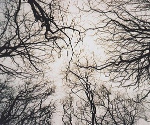 tree, photography, and sky image