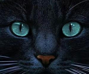 cats balck blue beautiful image
