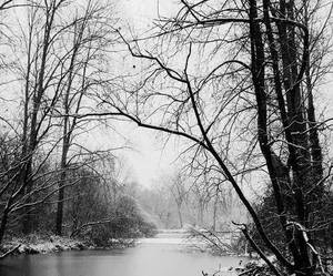 black and white, branches, and trees image