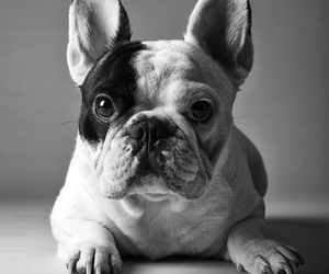 black and white, cute, and dog image