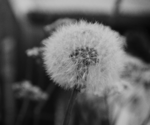 black and white, flower, and grass image
