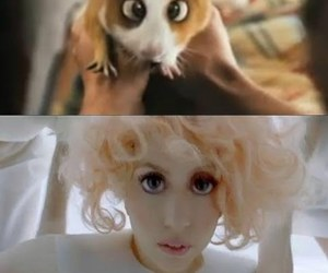 bedtime stories, Lady gaga, and lol image