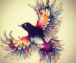 bird, colors, and animal image
