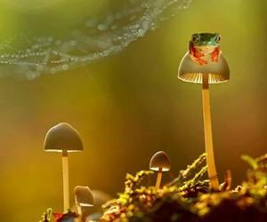 frog mushroom drugs image