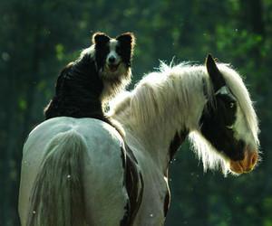 dog and horse image