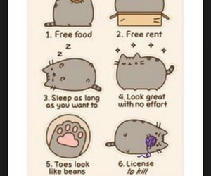 pusheen the cat, be a cat, and 6 reasons image