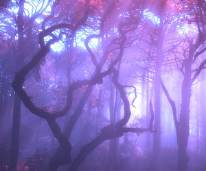 purple, tree, and forest image
